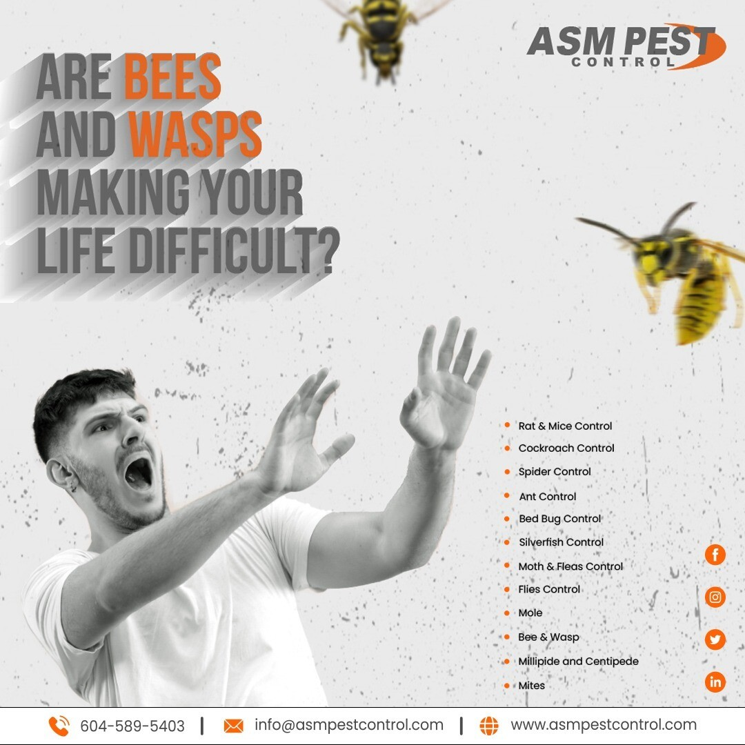 bee control experts in the lower mainland