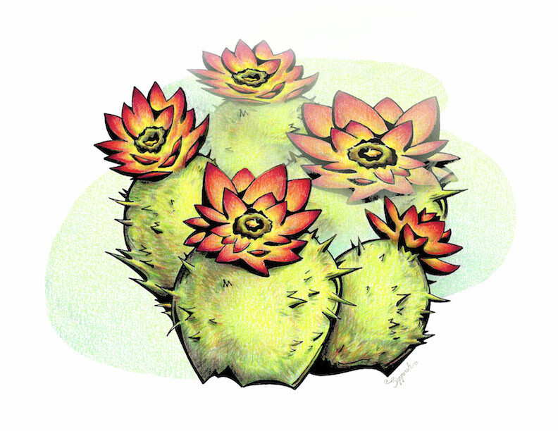 Pretty Cactus Flowers Colored Pencil Drawing Illustrative Art