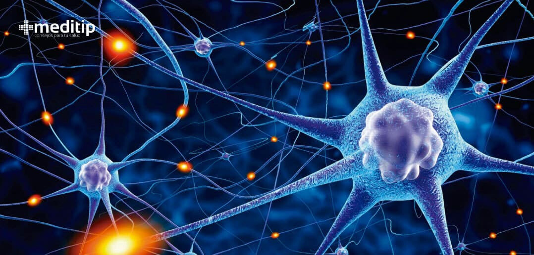 The main neurons responsible for the functioning of the human body