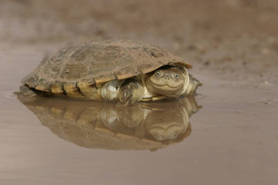 Turtles are so chill.
