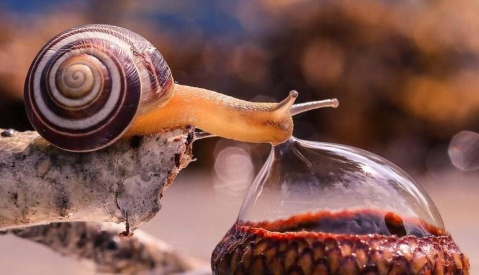 snail drinking from a water droplet