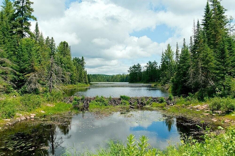 Canadá: Parque Provincial Algonquin