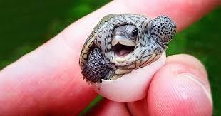 Hermosa Tortuga
