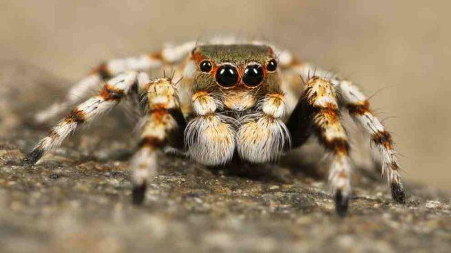 La araña gigante que aterroriza en Mamby.