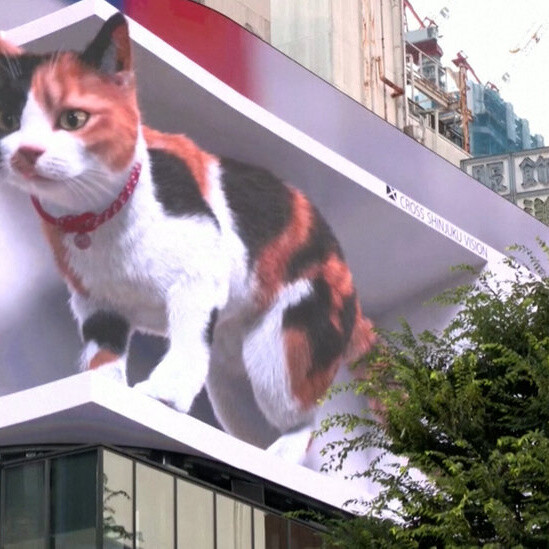 A Digital Cat Is Melting Hearts (and Napping a Lot) in Japan