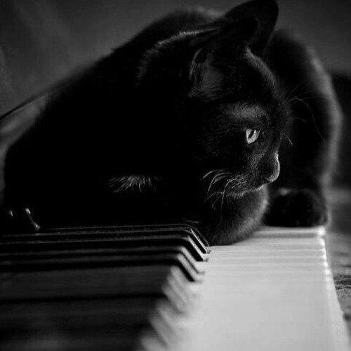 Un gato negro sentado frente a un piano.