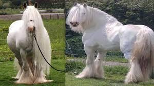 10 unicos caballos del mundo crelo es cierto
