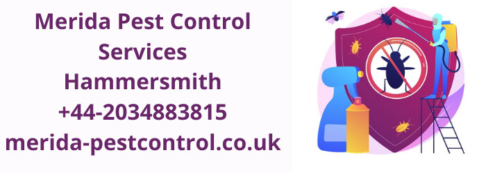 Parasite Control Hammersmith-- We Can Provide Appropriate Parasite Control Methods To Conserve Your Home