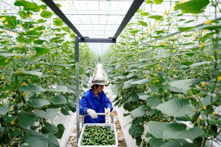 Qatar Greenhouse Market: Competitive Analysis with Key Players, Share, Growth, Size and Trends