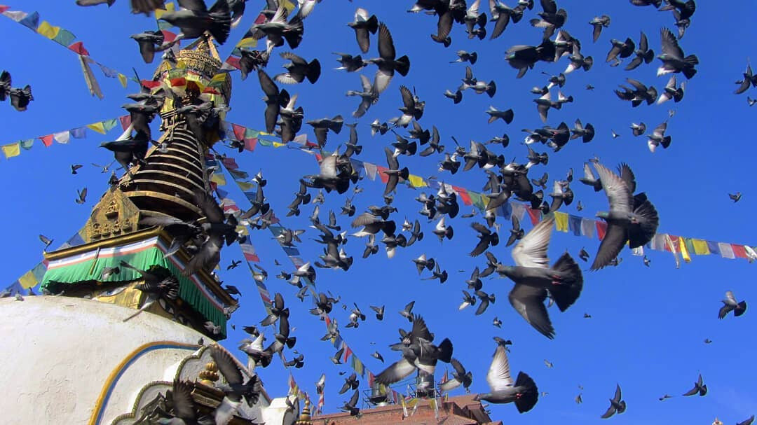 Syambhunath is one of the oldest Buddhist temple