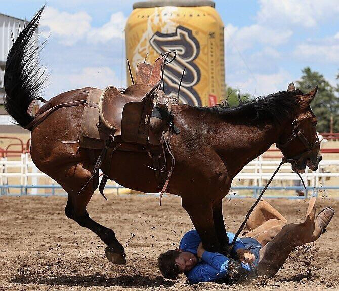 not the horse's first rodeo
